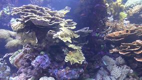 Fish and coral reef stock video