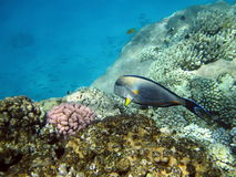 Fish and coral reef stock images