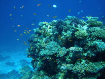 Fish and coral reef in Red sea Stock Photos