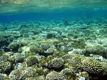 Fish and coral reef stock photos