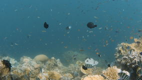 Fish on coral reef shot. A wide shot of corals and fishes underwater stock video