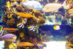 Fish at coral reef Royalty Free Stock Photography