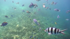 Coral reef and tropical fish.Philippines. Fish and coral reef. Tropical fish on a coral reef. Wonderful and beautiful underwater world with corals and tropical stock footage
