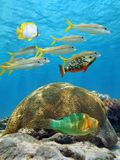Fish and coral Royalty Free Stock Photos