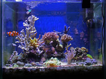 Fish and coral tank Royalty Free Stock Photography