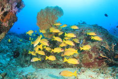 Fish and Coral Royalty Free Stock Photos