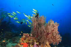 Fish and Coral Stock Photography