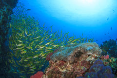 Fish and Coral Royalty Free Stock Photography