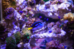 Fish and corals royalty free stock images