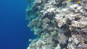 Fish and Corals near the Blue Hole. stock video footage