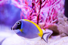 Fish and corals Stock Images