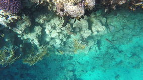 Fish and corals on reefs stock video footage
