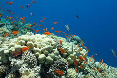 Fish and corals in the sea Stock Images