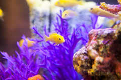 Fish and corals Stock Photography