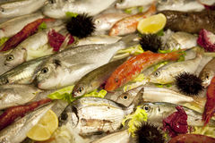 Fish in a counter Royalty Free Stock Image