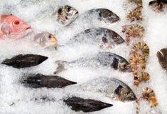 Fish counter stock photos