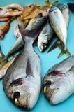 Fish counter Stock Image