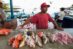 Fish on a counter. On a counter early in the morning already lies, caught by fishermen, fish. Stock Photo