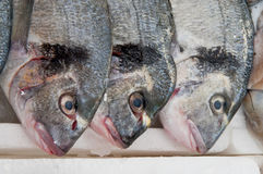At the Fish Counter. Fishes at the seafood counter in the market. Milan Stock Images