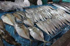 Fish on the counter in the market in Thailand stock image