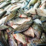 Fish on the counter of the street market. Seafood, catch, fisherman. Fish on the counter of street market. Seafood, catch, fisherman stock photo