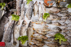Fish on the counter in the supermarket. Sliced raw, not cooked fish, lying in the ice on the counter in the supermarket. Fresh fish Royalty Free Stock Images