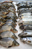 Fish is on countertop fish store. Royalty Free Stock Photography