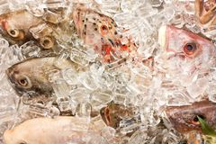 Fish covered with ice in market. Clear eyes denote freshness. Overhead view on fish covered with ice in market. Clear eyes denote freshness stock photography