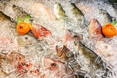 Fish covered with ice in market. Clear eyes denote freshness. Overhead view on fish covered with ice in market. Clear eyes denote freshness stock photos