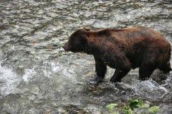 Fish Creek Wildlife Observation site in Hyder, Alaska. royalty free stock photos