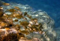 Fish in Crete royalty free stock photos