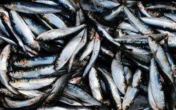 Fish. Croatia Dalmatia, fish market during fish festival Stock Photos