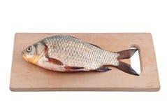 Fish crucian on board. Stock Photos