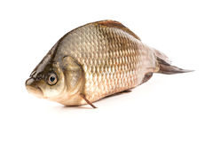 Fish crucian Royalty Free Stock Photography