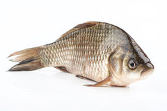 Fish crucian Royalty Free Stock Images