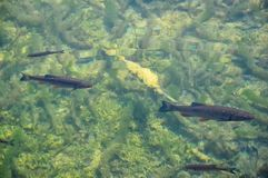 Fish in the crystal clear water seen from top stock photos