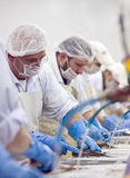 Fish cutters. Men working in a fish processing manufacture, cutting fish fillets. Image from the Fish Processing series stock photo