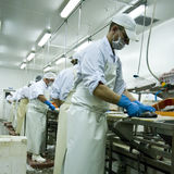 Fish cutters at work Stock Photography