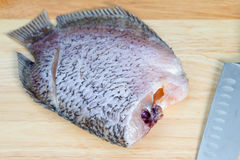 Fish. On cutting board in the kichent Stock Image
