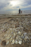 Fish dead on the beach Royalty Free Stock Image