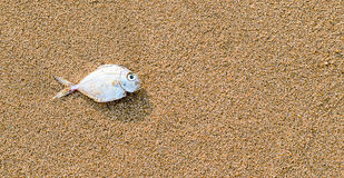 Fish death on the beach Stock Photography