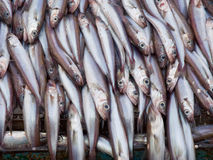 Fish on deck factory vessel Royalty Free Stock Photography