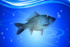 Fish in deep blue water Royalty Free Stock Image