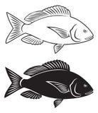 Fish dentex Stock Images