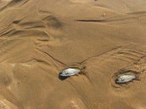 Fish in the desert. The dead fish in the desert Stock Photo