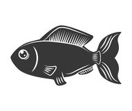 Fish design over  background. Sea life icon, vector grap. Sea life represented by cartoon fish over  and flat illustration Stock Image