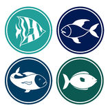Fish design. Over blue background,vector illustration Royalty Free Stock Photos