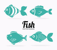 Fish design. Over white background, vector illustration Royalty Free Stock Image