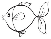 Fish. Detailed illustration of a fish line art on white Royalty Free Stock Image