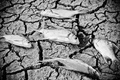 Fish died on cracked earth Stock Photos